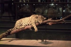 J 3 Musée de l'Histoire Naturelle (11)