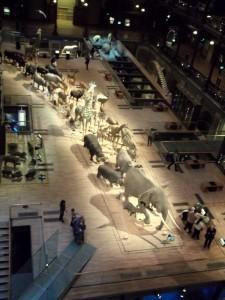 J 3 Musée de l'Histoire Naturelle (2)