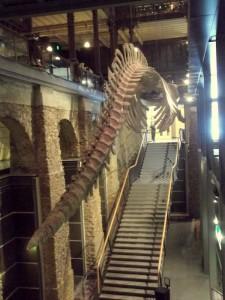 J 3 Musée de l'Histoire Naturelle (24)