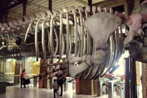 J 3 Musée de l'Histoire Naturelle (25)