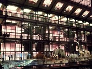 J 3 Musée de l'Histoire Naturelle (7)